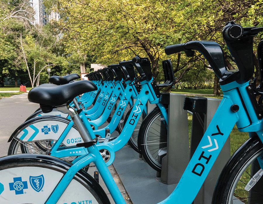Row of bikes along a tree-lined Hyde Park street